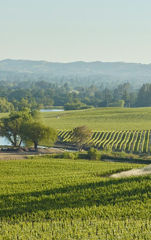 our-vineyards-william-hill_0